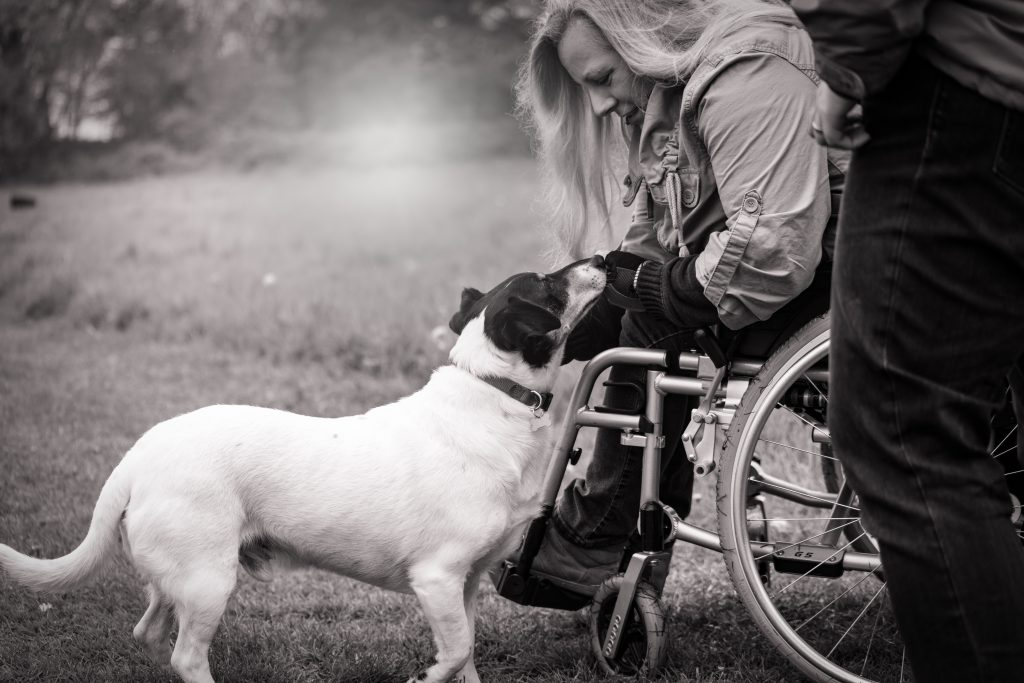 A service animal helps a person with a disability on a wheelchair